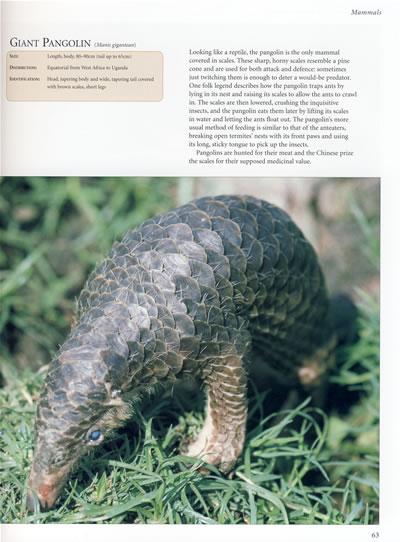 世界野生动物大百科ency