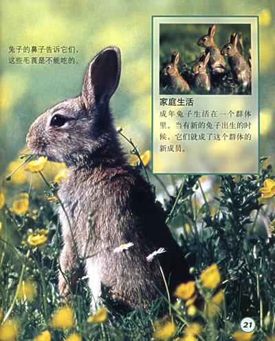 兔子和企鹅(动物宝宝成长写真)