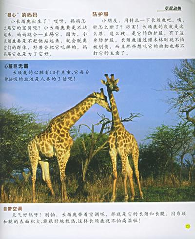 非洲最奇怪的动物