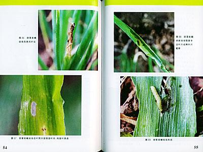 葱蒜类蔬菜病虫害诊断与防治原色图谱(蔬菜病虫害